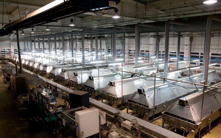 Šesta i poslednja ponuda: Švajcarski Batagon nudi 7,35 miliona evra za Fabriku akumulatora Sombor