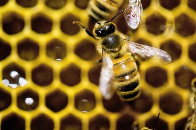 Apatinski pčelari nude 100 evra nagrade za informaciju i kradljivcima košnica